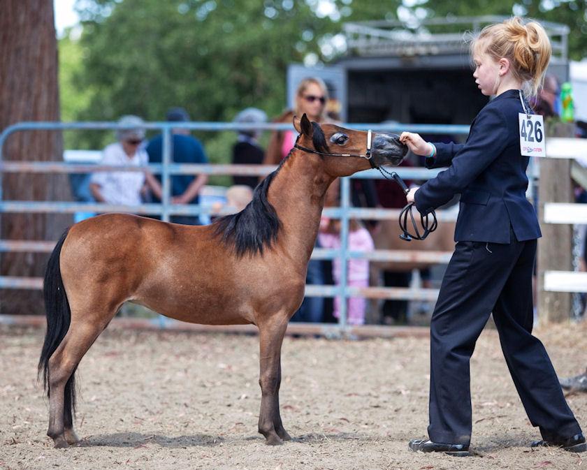 Miniature Horse Show